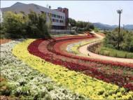 화순 남산공원에 활짝 핀 금어초